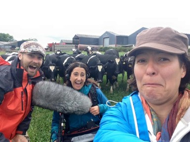 Production shoot for BBC documentary attacked by cows