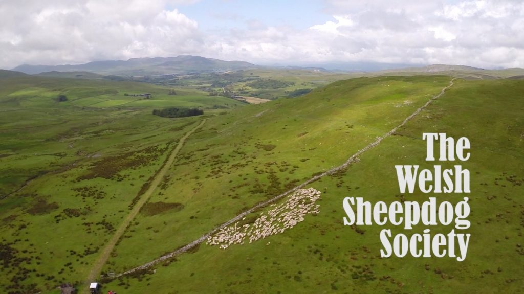 A short film we created for The Welsh Sheepdog Society